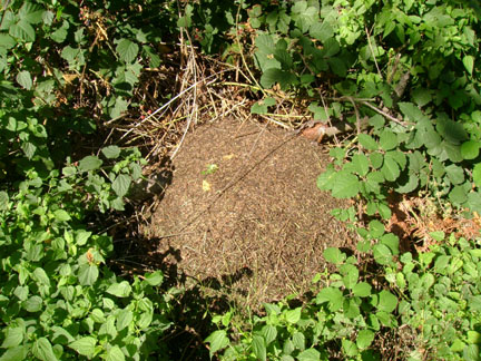 Ant hill near gate